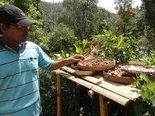 Nyoman, notre guide, qui nous fait découvrir les meilleures graines de café au monde.