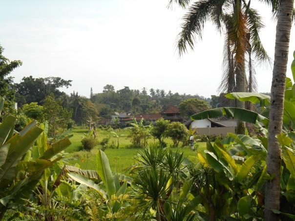 Ubud et ses rizières, vue de notre chambre.