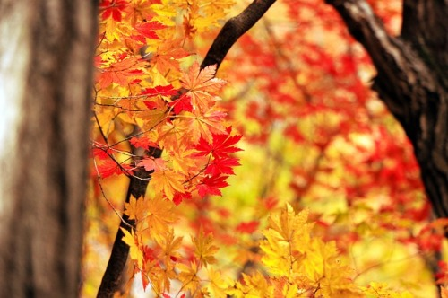 autumn-507549_640