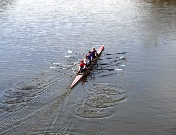 oarsmanship-903809_960_720